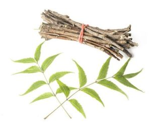 Ayurvedic herbs help you boost the immune system naturally. Natural herbs such as ashwagandha