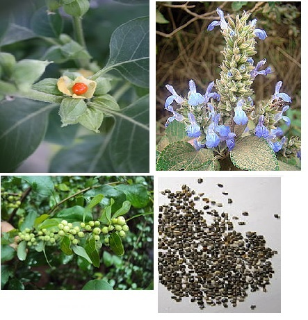 Using herbs for hypothyroidism is one of many Ayurvedic treatments. Ashwagandha and Guggul herbs have long been used to reduce thyroid inflammation.