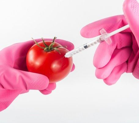 GMO means genetically modified organisms. Fact is GMO foods are produced from organisms that have had changes in their DNA using genetic engineering.