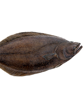 Halibut fish is rich in omega-3-fatty acids and is a good source of Vitamin B6