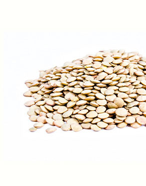 •Lentils (Lens ensculenta) are edible pulses that are known for their 'lens' shaped seeds.•Along with beans and peas