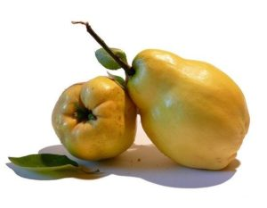 The quince is a small nutritious
