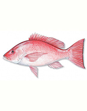 Health benefits of Red Snapper in nutrition as natural medicine supported by science & research