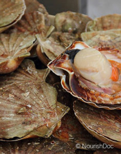 Health benefits of Scallops in nutrition as natural medicine supported by science & research