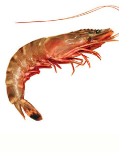 Shrimp is the most popular seafood in the US with many health benefits. They are low in calories & can help lower the risk of several conditions.