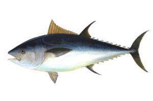 Tuna is an inexpensive source of vitamins